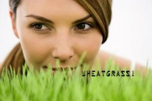 gluten-free-wheat-grass-juice