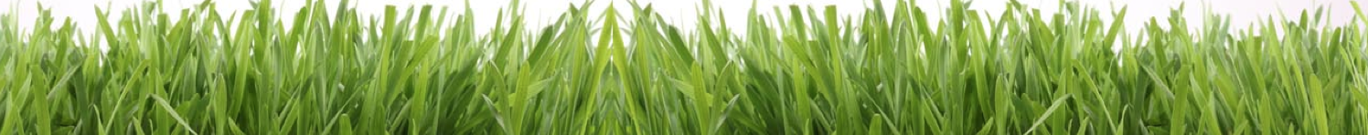 gluten free wheat grass