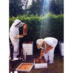 Bee Balm Victoria 2
