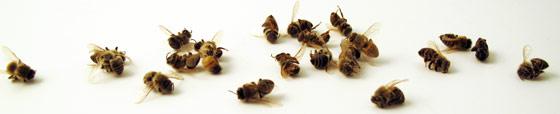 saveourbees-group