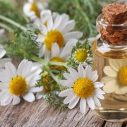 Essential Oil Chamomile