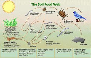 SoilFoodwebDiagram