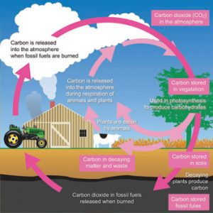gluten free carbon cycle