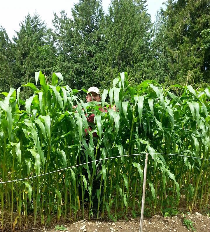 jds-sunshine-jams-Corn-Patch-JUl-21
