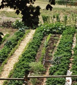 Okanagan Rawsome Garden WP