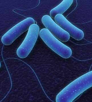 bacteria wp