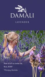 Taco Revolution Damali Lavenderfest