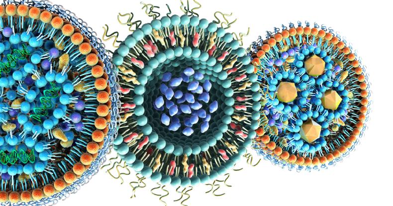ساختار میکروویلی های روده کوچک نانوتکنولوژی استارتاپ