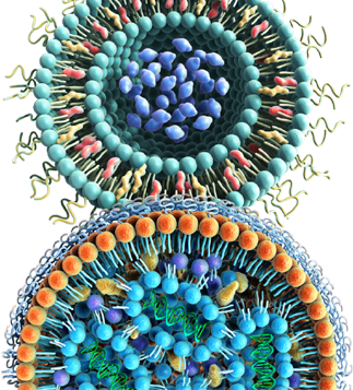 nano-particle celiac disease wp