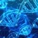 NCWS miRNA Celiac Disease