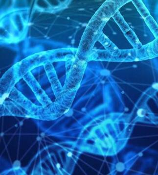 gene variations celiac disease wp